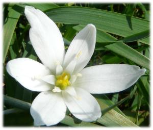 sophrologie angers fleur