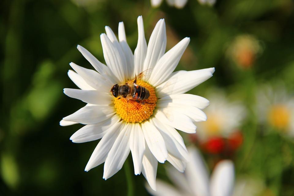 sophrologue angers sophrologie cours fleur et abeille